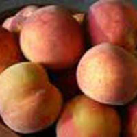 Peachcot
