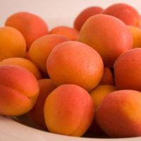 Goldbar Apricot Trees