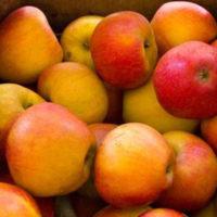 Greenmeadows Cox Orange Adpples
