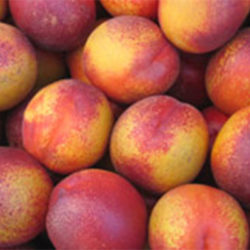 Mayglo Nectarines