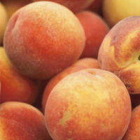 Paragon Peach Tree