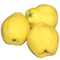 Pineapple Quince Trees