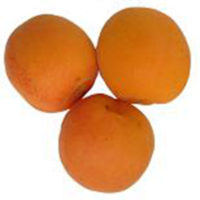 Sundrop Apricot Trees